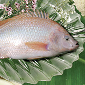 Seafood pangasius - Other products
